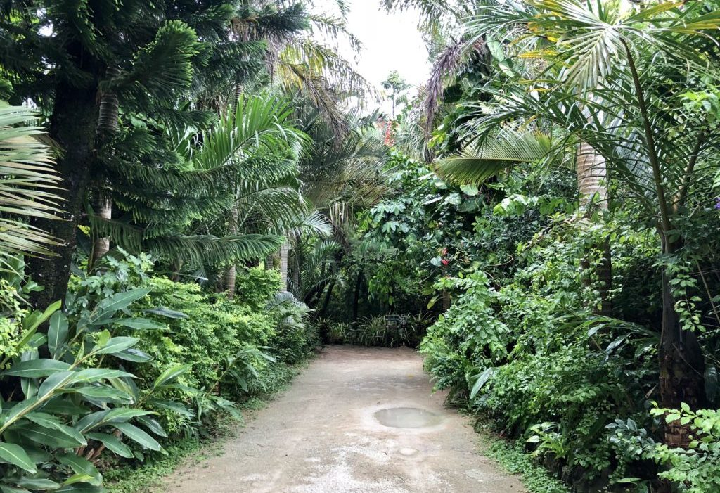 由布島 園内の道