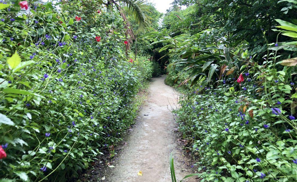 蝶々園への道