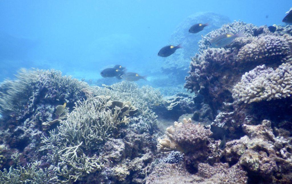 サンゴとお魚
