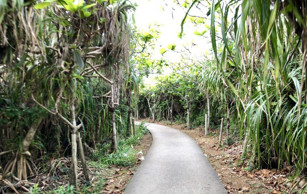 通り池への道