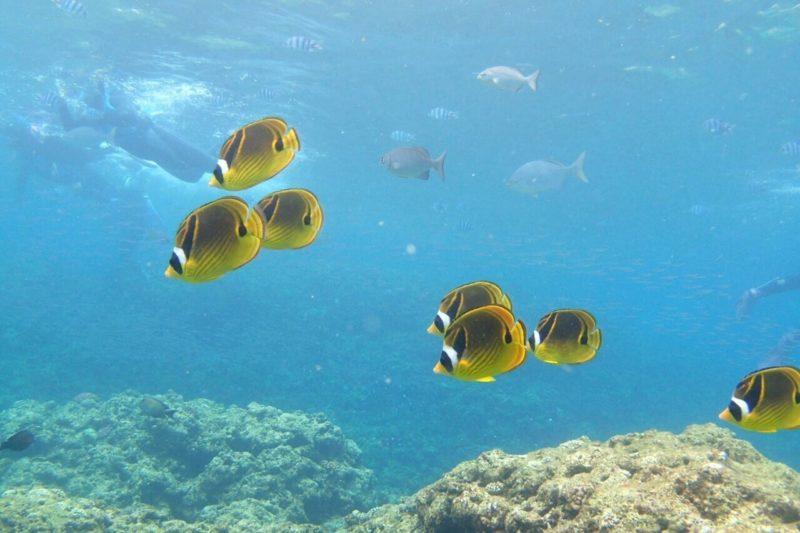 GoPro 水中撮影