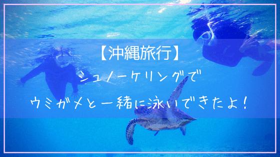 宮古島でウミガメとシュノーケリング体験
