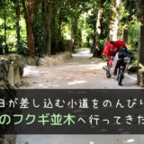 沖縄にある備瀬のフクギ並木へ行ってきた。
