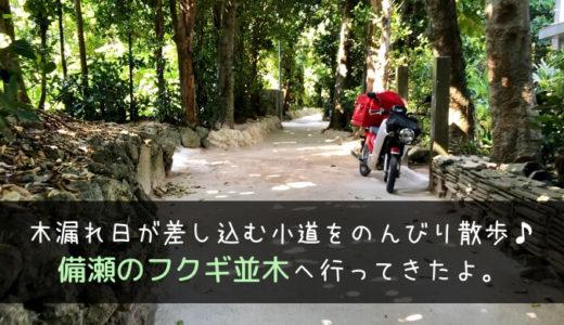 沖縄の癒やしスポット『備瀬のフクギ並木』へ。所要時間や感想など