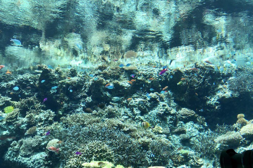 サンゴ&熱帯魚