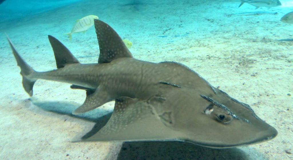 エイみたいなサメみたいな・・・