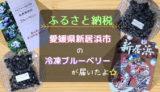 ふるさと納税で愛媛県新居浜市の冷凍ブルーベリーが届いたよ。