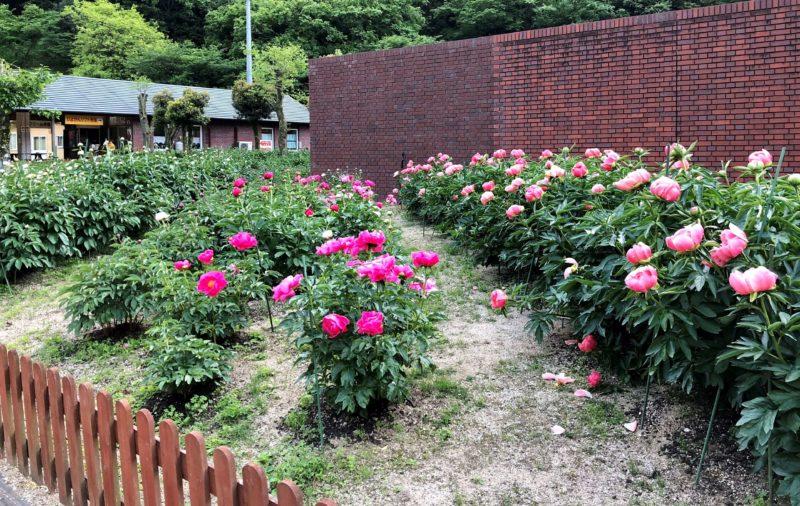 マイントピア別子 花壇