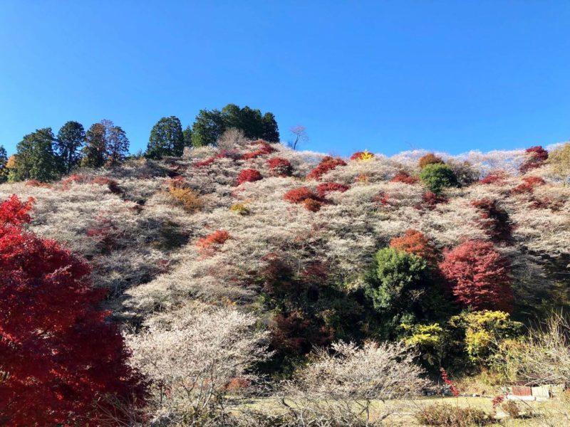 GoPro撮影 紅葉