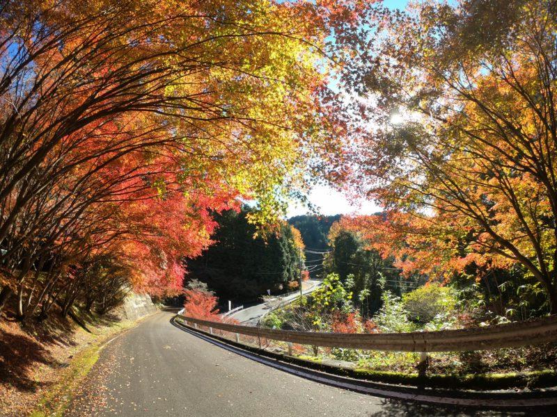 GoProで撮影した紅葉